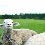 海外就職に迷える子羊さんの背中を押す4つのヒントを考えてみた