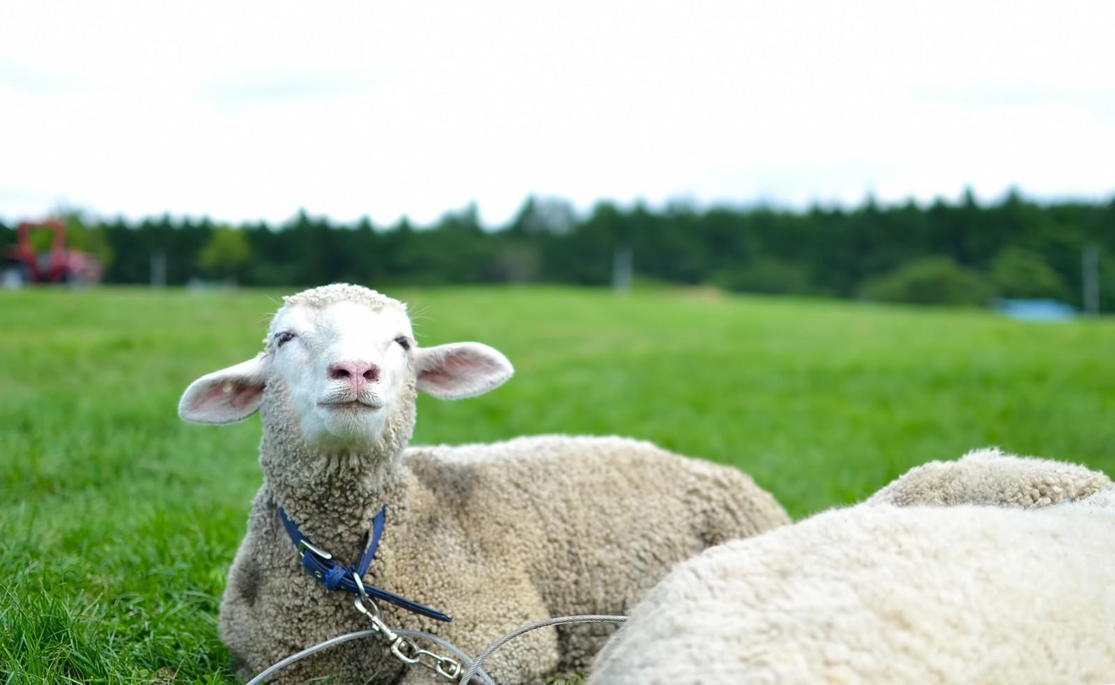 迷える子羊さん